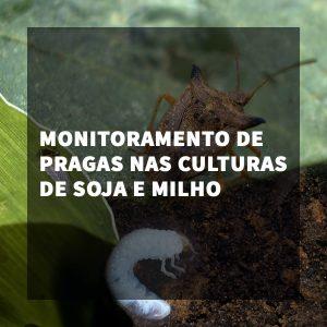 Monitoramento de pragas nas culturas de Soja e Milho